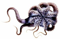 How the Freaky Octopus Can Help us Understand the Human Brain | WIRED