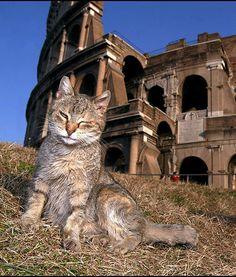 Cat Coliseum- sadly it looks like he has a pretty tough life :(