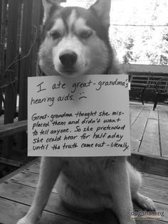 Dog Shaming features the most hilarious, most shameful, and never-before-seen doggie misdeeds. Join us by sharing in the shaming and laughing as Dog Shaming reminds us that unconditional love goes both ways. Dog Quotes Funny, Funny Animal Memes, Cute Funny Animals, Dog Memes, Funny Animal Pictures, Funny Cute, Funny Dogs, Husky Quotes, Stupid Animals