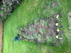 Tomato and herb garden update.                      5-30-13