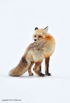 Foxes are magical. We used to have a den on the way to our lake house, and we'd watch the pups grow up each year.