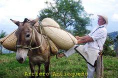 ARRIEROS PAISAS.........Medio de transporte de nuestros campesinos Antioqueños ........http://www.chispaisas.info/guatape2.htm..