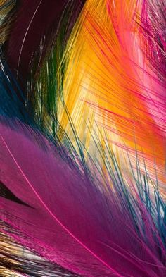 Hd Cool Color Feathers cell phone wallpapers