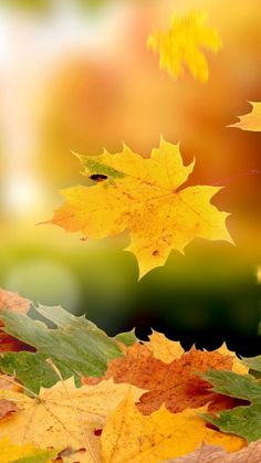 samsung wallpaper autumn Beautiful autumn leaves flower wallpaper for LG smartphone Fundo Hd Wallpaper, Background Hd Wallpaper, Wallpaper Backgrounds, Wallpapers, Iphone Backgrounds, Autumn Leaves Wallpaper, Fall Wallpaper, Flower Wallpaper, Wallpaper Telephone