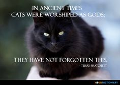 In ancient times cats were worshiped as gods; they have not forgotten this.