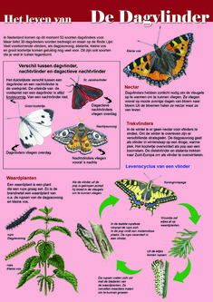 Taste Of Nature, God's Heart, Fauna, Science For Kids, Garden Design, Butterfly, School, Montessori, Insects