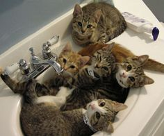 yep! sink lovers they are!