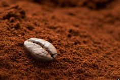 Grinding Coffee Beans Gives Chance to Have Fresh Coffee - CoffeeLoverGuide Coffee Uses, Fresh Coffee, Coffee Tasting, Coffee Drinks, Coffee Grounds As Fertilizer, Coffee Scrub, Coffee Filters, Black Coffee, Vape Tricks