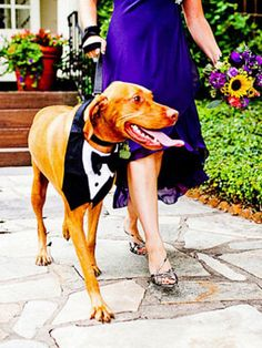 If you're thinking about including your beloved pet in the ceremony, make sure they're dressed to impress as well!