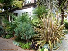 Phormium. Fan Aloe. Probably a European fan palm (Chamaerops humilis) there in the background. Which just gave me an idea....
