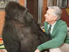 Koko and Mister Rogers - Coolest Gorilla & Coolest Man, hanging out together.