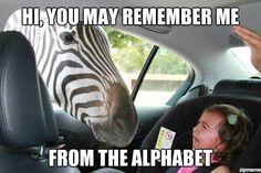 Z is for Zebra