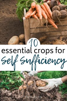 Ready to grow a self sufficient garden? These 10 plants are essential for your food self sufficiency goals. Learn the top producers, why you need them, how to plant them and store them and the best crops to grow for your self sufficient homestead. Homestead Gardens, Homestead Farm, Homestead Layout, Self Sufficient Homestead, Organic Horticulture, Organic Gardening Tips, Vegetable Gardening, Sustainable Gardening, Veggie Gardens