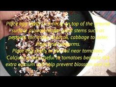 Egg Shell's And Tea Bags Treat For Your Garden... - YouTube