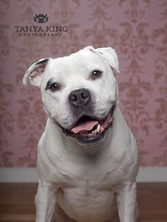 Daisy by Tanya King Photography