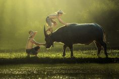 Favorites - Photos Curated by somchai sanvongchaiya - 500px