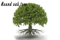 Round oak tree by AndrewWhite on @creativemarket