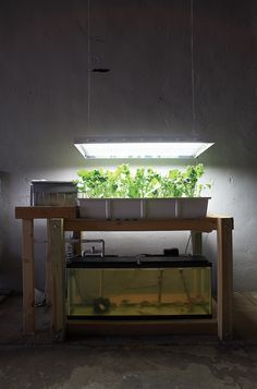 Urban Organics article