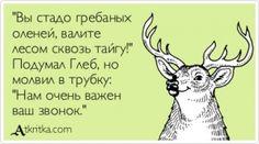 """Аткрытка №368724: \""""Вы стадо гребаных  оленей, валите  лесом сквозь тайгу!\"""" Подумал Глеб, но молвил в трубку: \""""Нам очень важен  ваш звонок.\"""" - atkritka.com"""
