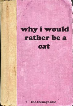 Why I would rather be a cat.