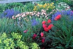 This small perennial garden offers cut-flower options from June through September