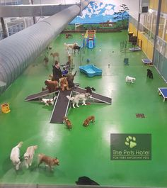 The Pets Hotel ( – dog kennel indoor Dog Boarding Kennels, Pet Boarding, Animal Boarding, Hotel Pet, Shelter Dogs, Animal Shelter, Dog Kennel Designs, Kennel Ideas, Pet Daycare