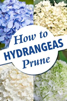 hydrangea care how to grow ; hydrangea care tips ; Types Of Hydrangeas, Pruning Hydrangeas, Hydrangea Landscaping, Garden Landscaping, Planting Flowers, Flowers Garden, Caring For Hydrangeas, When To Prune Hydrangeas, Pruning Plants