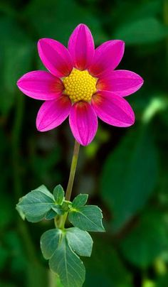"""Dahlia Stillwater Plum by rmg15, via Flickr."""