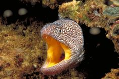 Scuba diving in #Oman