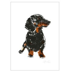 Tiff Howick Dachsund Print: We love dogs at SNAP, and welcome our furry friends instore all day long. These lovely screen prints are designed and printed here in London by Tiff Howick.