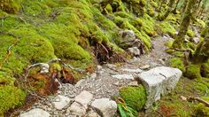 The Old Ghost Road mountain bike trail, Westport (New Zeland) Photo: jimcummings