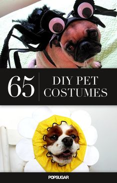 Need ideas for how to dress your pet for Halloween? Check out the ultimate DIY pet costumes list! Pet Halloween Costumes, Animal Costumes, Pet Costumes, Dog Halloween, Halloween Ideas, Dog Crafts, Animal Crafts, Diy Upcycling, Animal Projects