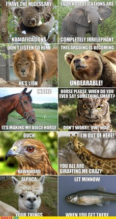 Cute animal sayings!