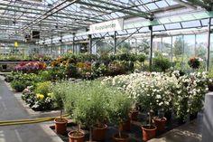 verschillende soorten terrasplanten verkrijgbaar bij tuincentrum Van Eeckhaut