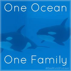 One ocean one family at #seaworld #orca