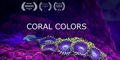 In this video we have tried to show movement and the enormous chromatic beauty of corals, a kind of marine animals that despite being one of the oldest animals on our planet, are mostly unknown.  You will discover its stunning beauty, its spectacular colors and the mystery of his movements.   To capture these images it was necessary to apply the technique of time lapse as the slow movements of these animals are very difficult to see at a glance.  The use of macro lens gives a large eno...