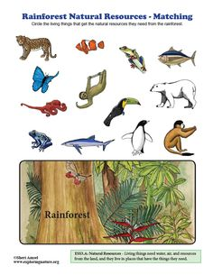 Learn about ecology and science through simple, fun activities on Exploringnature.org Biomes, Zoology, Natural Resources, Geography, Fun Activities, Around The Worlds, Science, Bird, Amazon