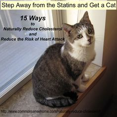 Step Away from the Statins and Get a Cat - 15 Ways to Naturally Reduce Cholesterol and Reduce the Risk of Heart Attack