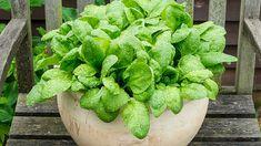 9 zöldség, amit a teraszon is könnyű nevelni  http://www.nlcafe.hu/otthon/20150403/kert-terasz-balkon-zoldseg-kerteszkedes/