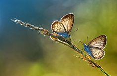 podemos ver dos hermosa mariposas