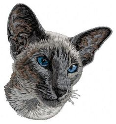 Best of Siamese Cat pictures. Somali, Sphynx, Maine Coon, Textiles, Leopards, Color Blending, Siamese Cats, Beautiful Cats, Portrait