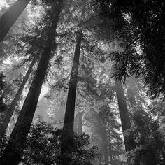Vivian Maier Street Photography - www.vivianmaier.com
