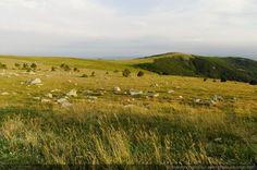 Herbe rase et cailloux au sommet du Mont-Aigoual. - [Paysages du Mont-Aigoual]