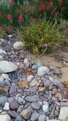 Dry Creek Bed & Succulent Garden