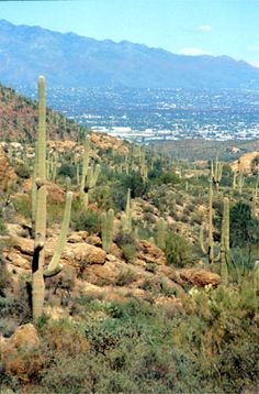 Tucson, AZ, lived there when I was young and make trips often to visit my fam who lives there :)