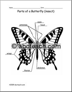 Pin by D J on love, darrows/carter. | Butterfly body parts ...