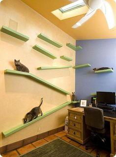 Casa modificada para vivir con gatos