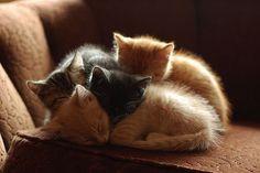 Kittens huddling together