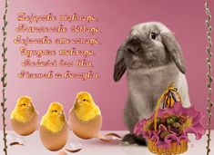 Happy Easter, Rabbit, Anna, Happy Easter Day, Bunny, Rabbits, Bunnies