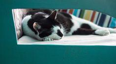 dijjo, pet bed, cat bed www.dijjo.com www.facebook.com/dijjo.design
